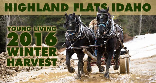2016 Highland Flats Winter Harvest