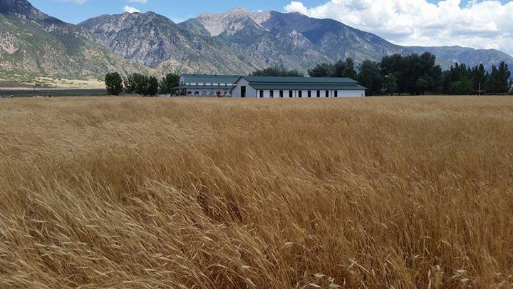 Einkorn Field