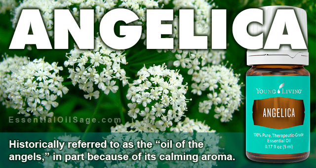 Young Living Angelica Essential Oil