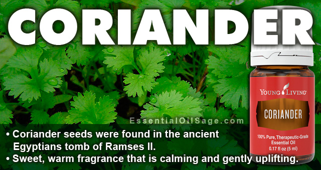 Young Living Coriander Essential Oil