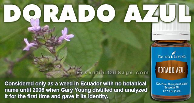 Young Living Dorado Azul Oil