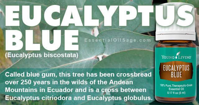 Young Living Eucalyptus Blue Oil