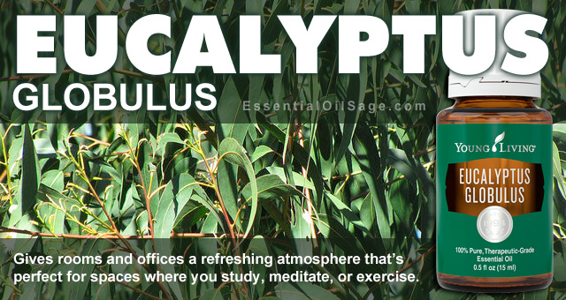 Young Living Eucalyptus Globulus Oil