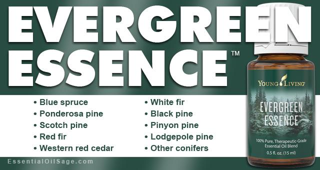 Evergreen Essence