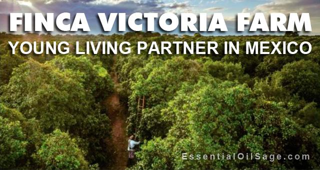 Finca Victoria Farm, Mexico