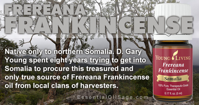 Young Living Frereana Frankincense Oil
