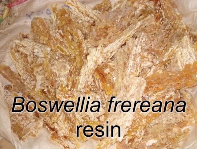 Boswellia frereana resin