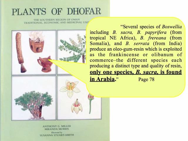 Plants of Dhofar book on Boswellia sacra frankincense