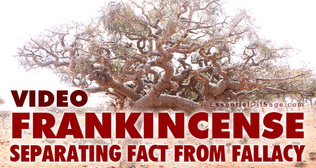 Frankincense Fact & Fallacy