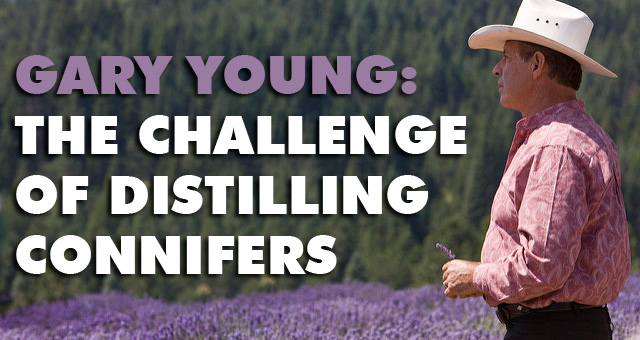 Gary Young: Challenge of Distilling Connifers