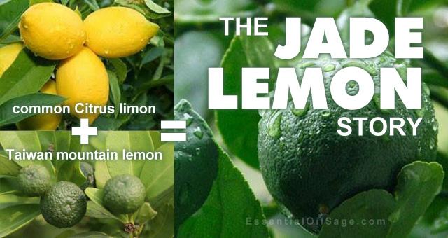 common lemon + mountain lemon = jade lemon