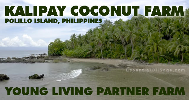 Kalipay Coconut Farm