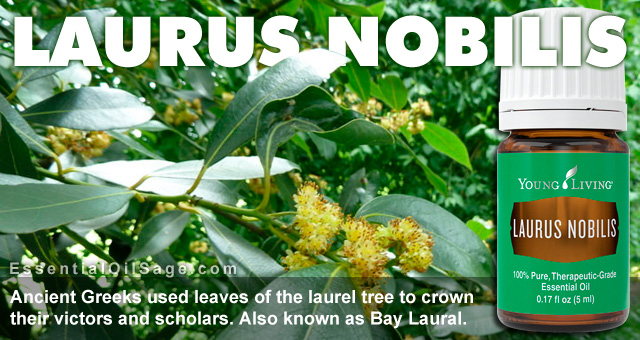 Young Living Laurus Nobilis Essential Oil