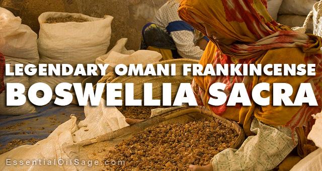 Sarced Omani Frankincense Boswellia Sacra