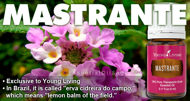 Young Living Mastrante Oil