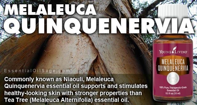Melaleuca Quinquenervia Essential Oil