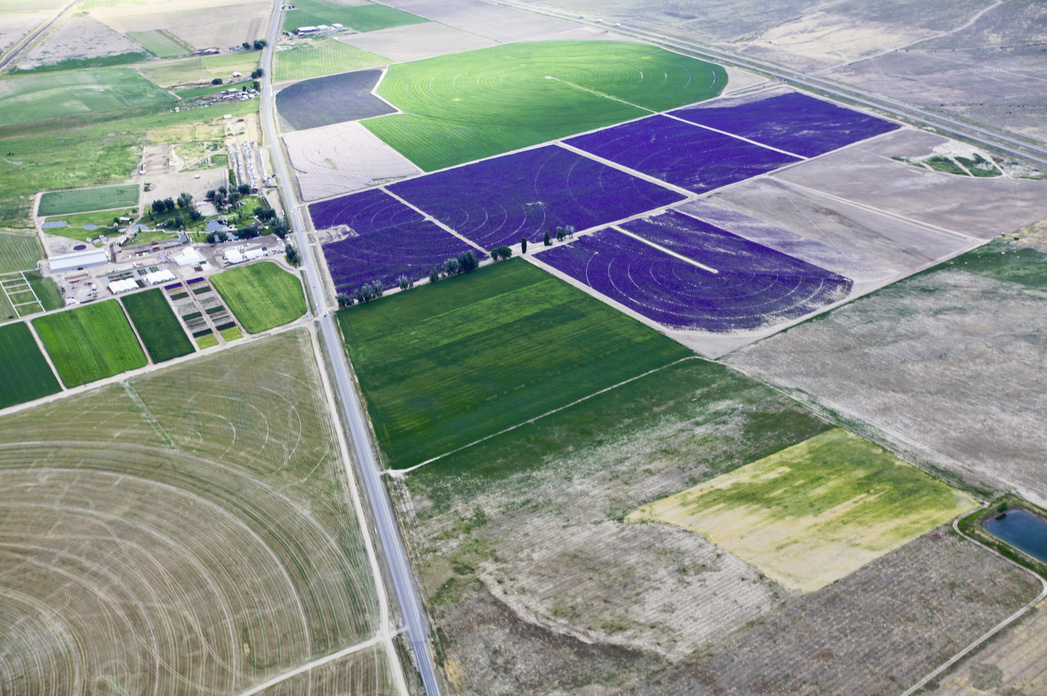 Arial of Young Living Lavender Farm, Mona, UT