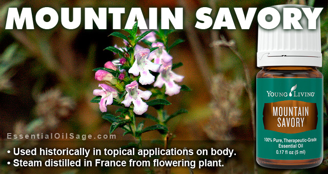 Young Living Mountain Savory Oil