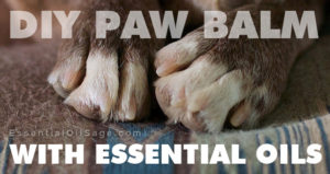 Paw Balm with Essential Oils