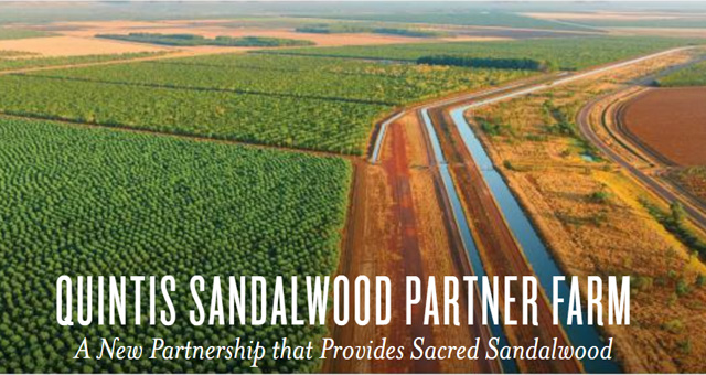 Quintis Sandalwood Farm