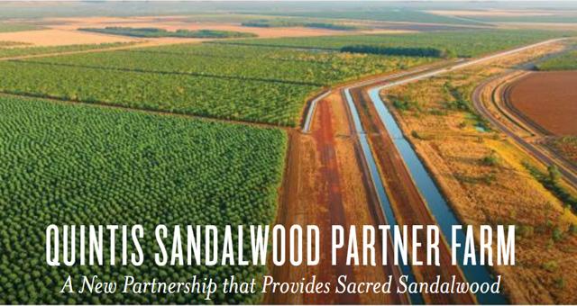 Quintis Sandalwood Farm