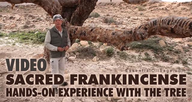 Sacred Frankincense Oman Trip