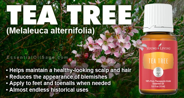 Young Living Melaleuca Oil