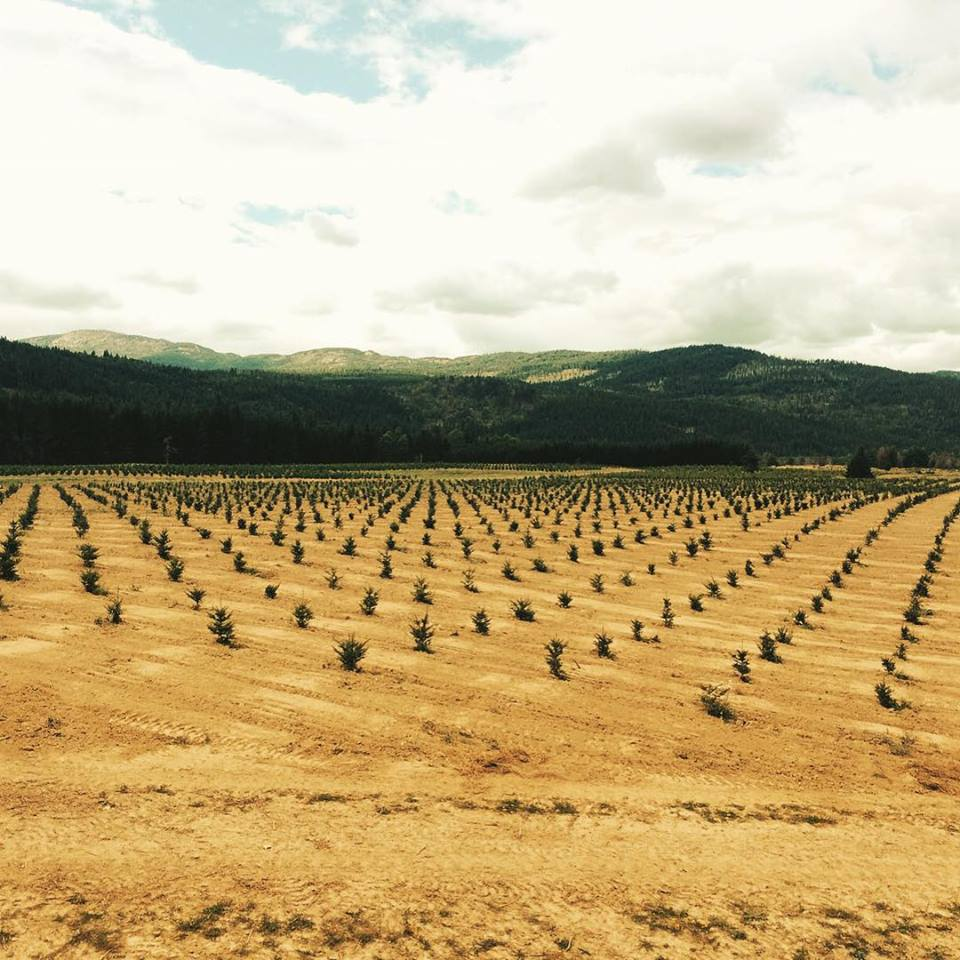 Young Living Highland Flats Farm Reforestation