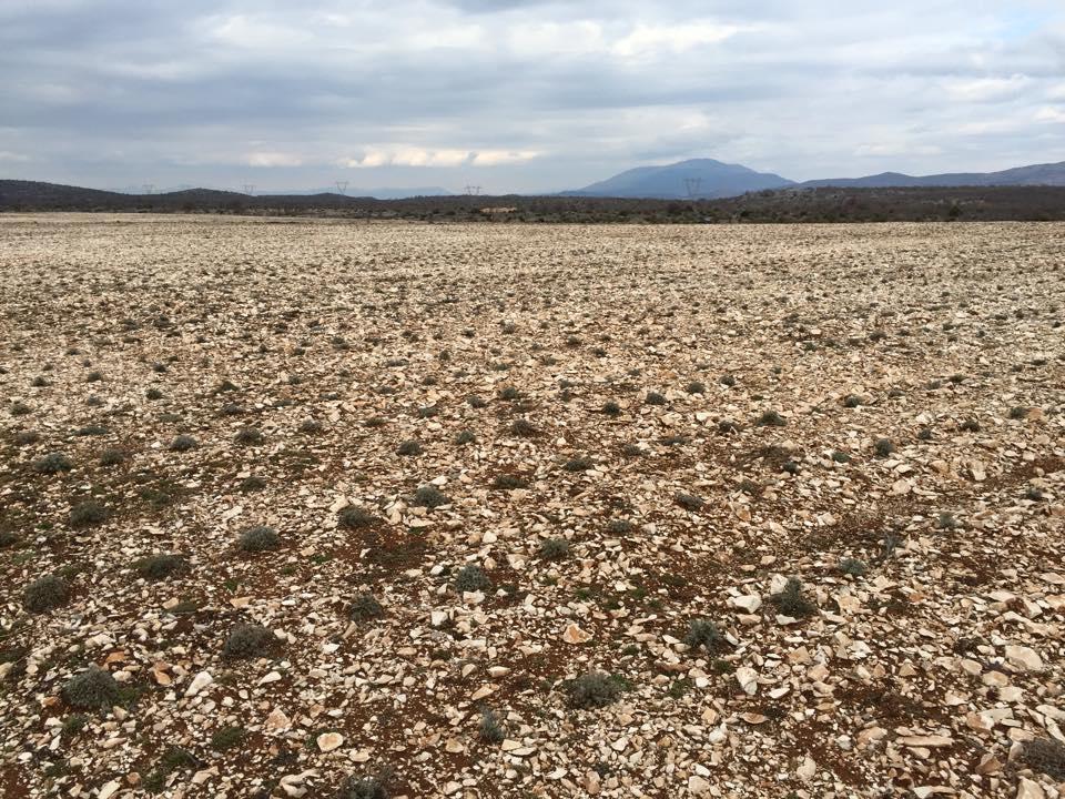 Helichrysum farm in Croatia