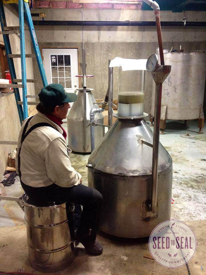 Gary Young tending a distiller, excited to see the oil