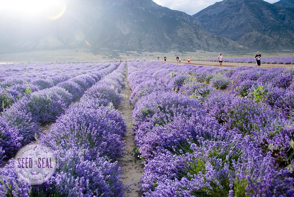 woolley-20150608-lavender1