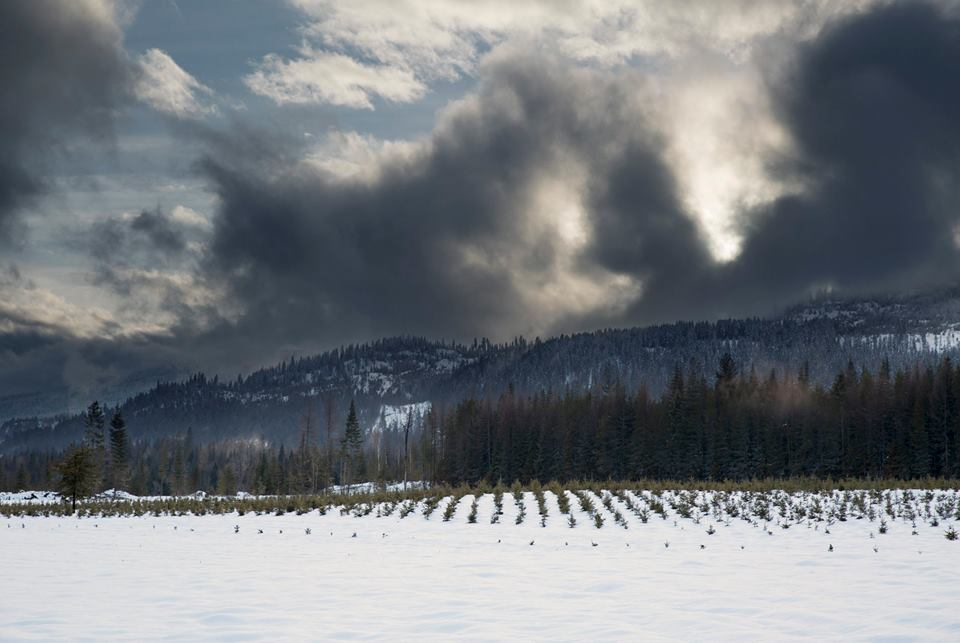 blanket of snow over Highland Flats Farm