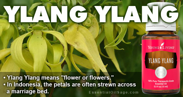 Young Living Ylang Ylang Essential Oil